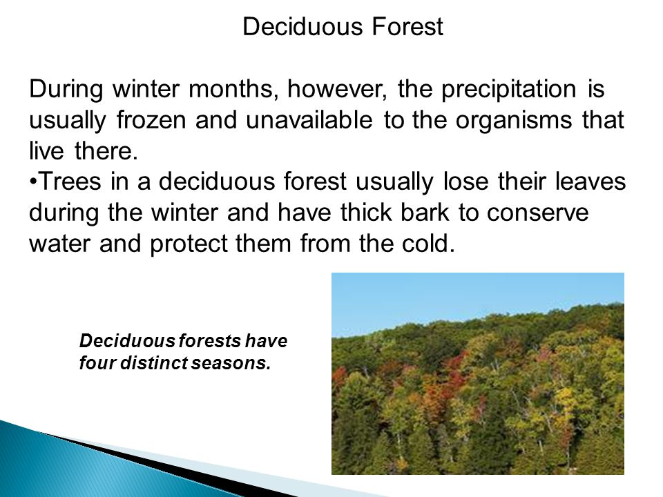 Deciduous Forest During winter months, however, the precipitation is usually frozen and unavailable to the organisms that live there.