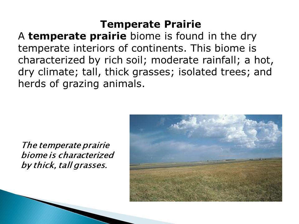 Temperate Prairie