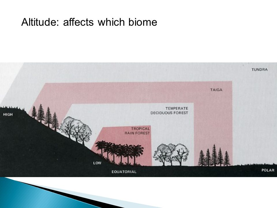 Altitude: affects which biome