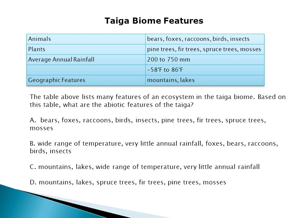 Taiga Biome Features Animals. bears, foxes, raccoons, birds, insects. Plants. pine trees, fir trees, spruce trees, mosses.
