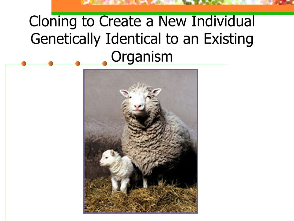 Cloning to Create a New Individual Genetically Identical to an Existing Organism