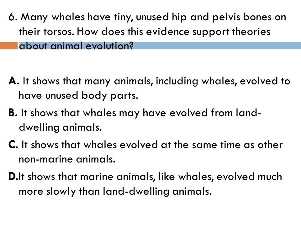 6. Many whales have tiny, unused hip and pelvis bones on their torsos