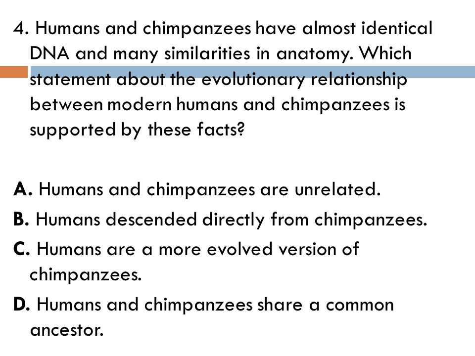 4. Humans and chimpanzees have almost identical DNA and many similarities in anatomy.