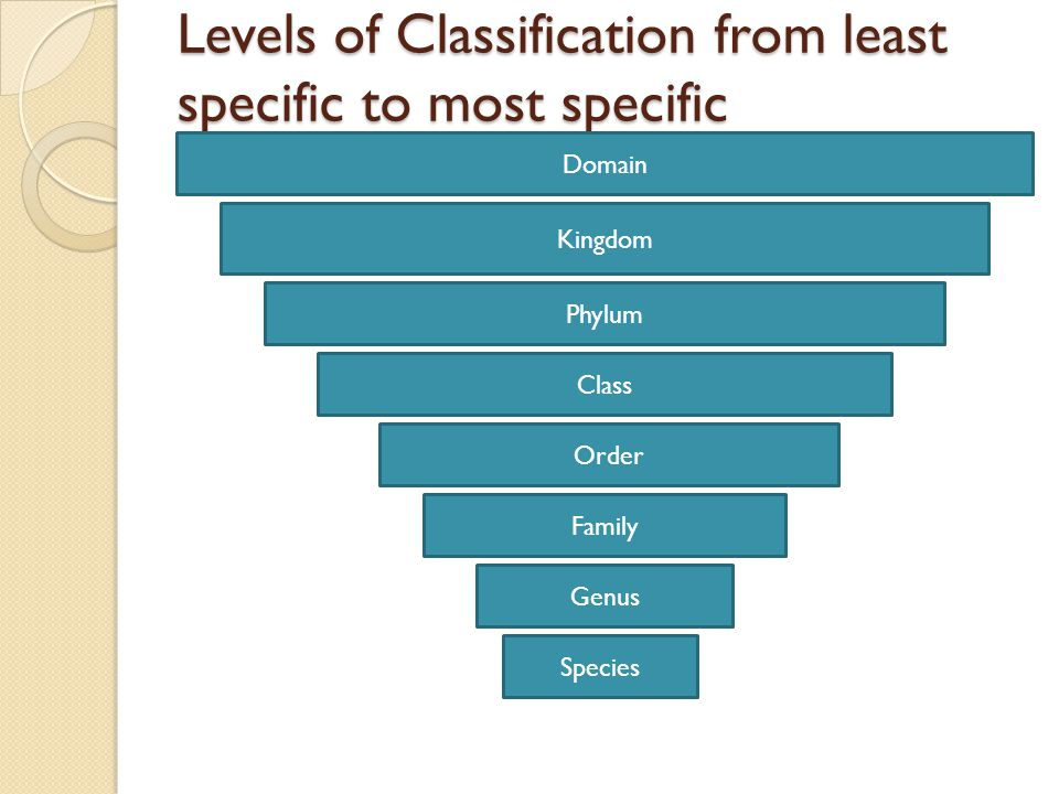 Levels of Classification from least specific to most specific