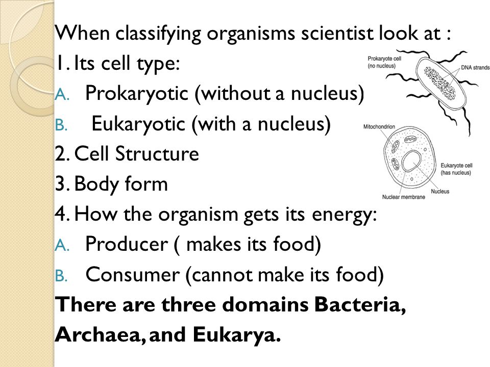 When classifying organisms scientist look at :
