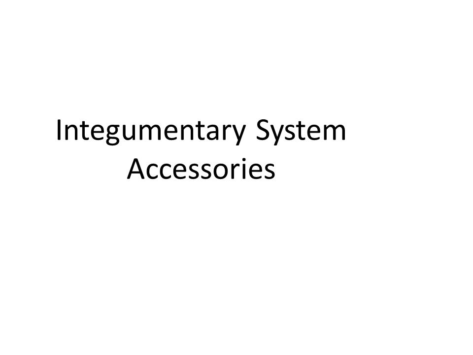 Integumentary System Accessories
