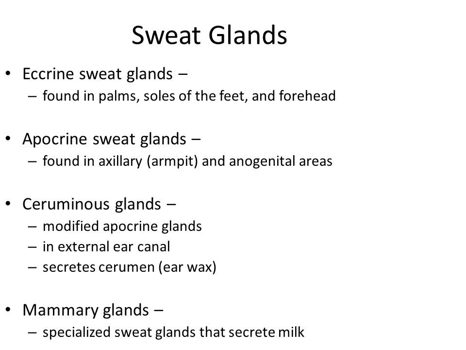 Sweat Glands Eccrine sweat glands – Apocrine sweat glands –