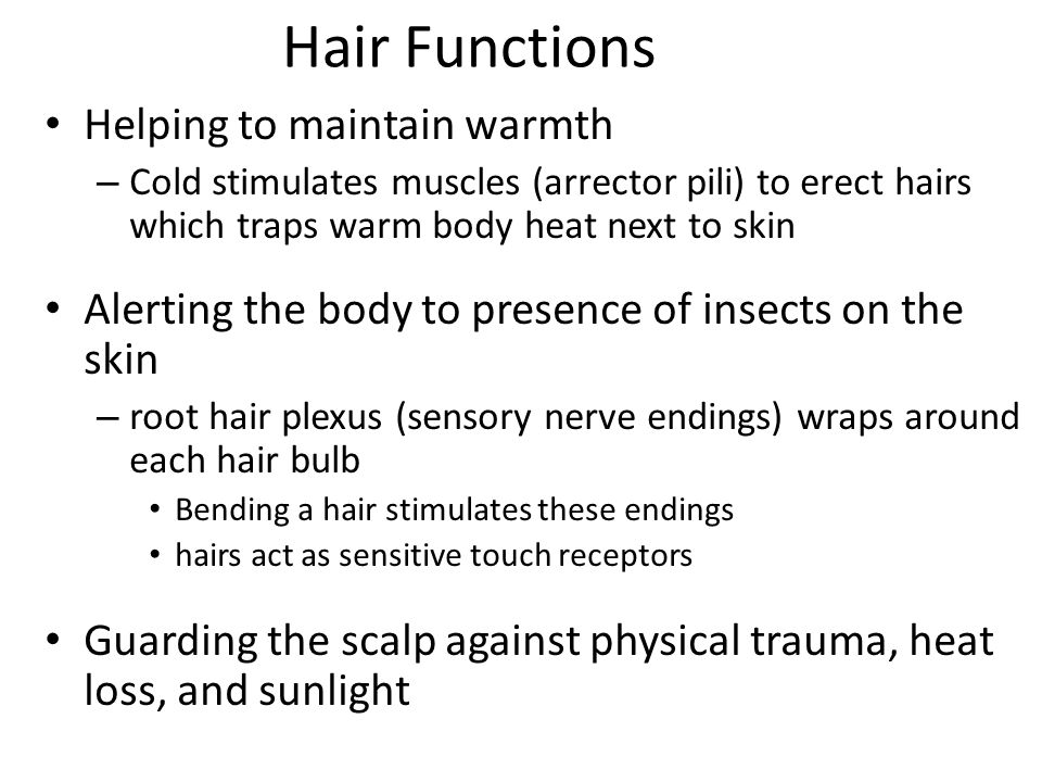 Hair Functions Helping to maintain warmth