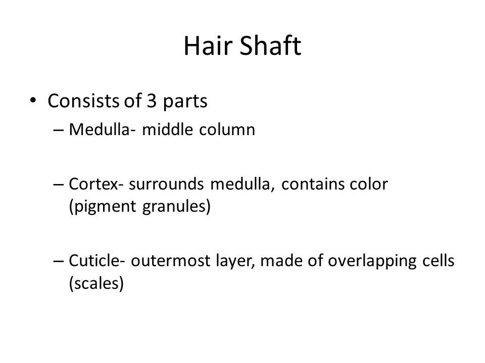 Hair Shaft Consists of 3 parts Medulla- middle column