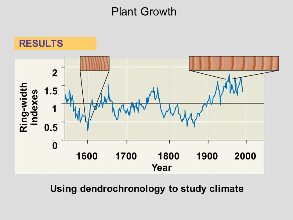 Plant Growth RESULTS 2 1.5 Ring-width indexes 1 0.5 1600 1700 1800