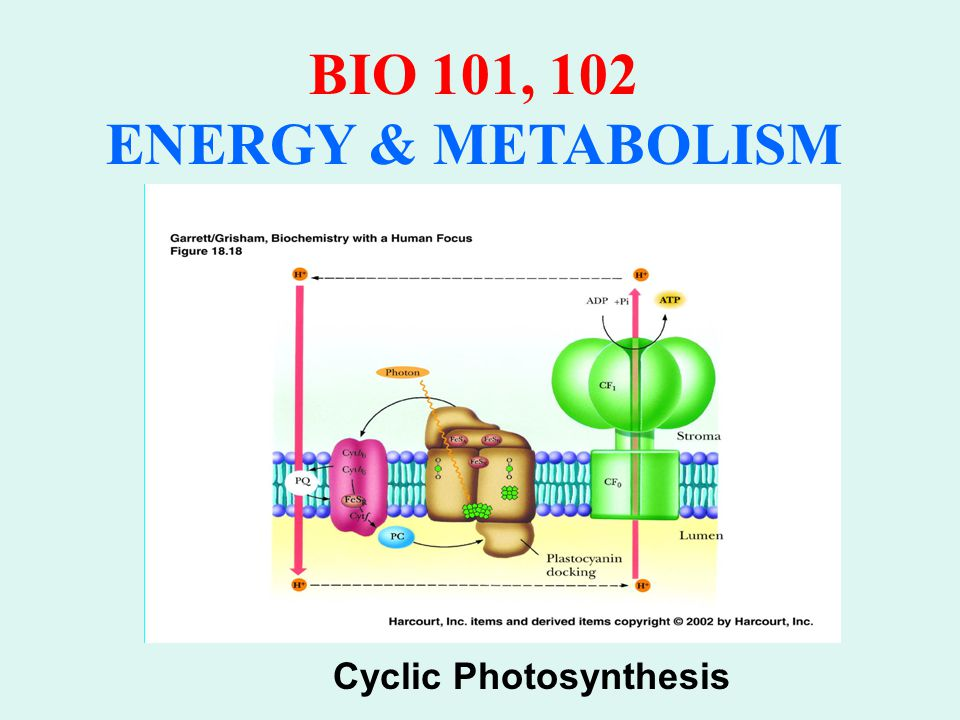Cyclic Photosynthesis