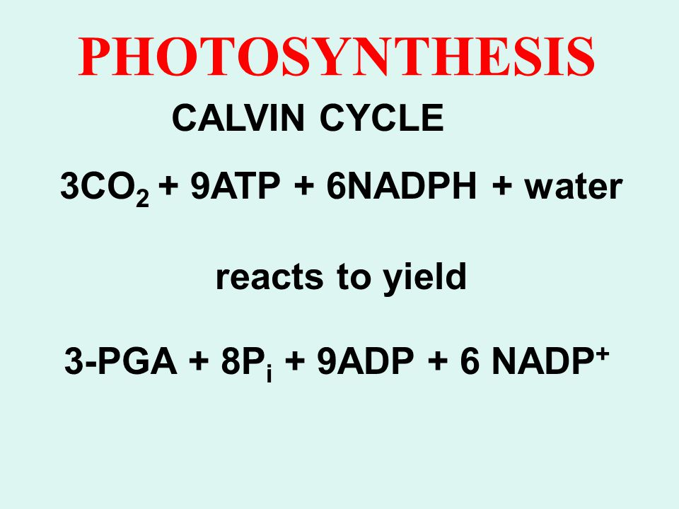 PHOTOSYNTHESIS CALVIN CYCLE 3CO2 + 9ATP + 6NADPH + water