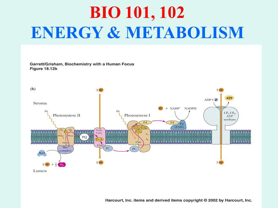 BIO 101, 102 ENERGY & METABOLISM