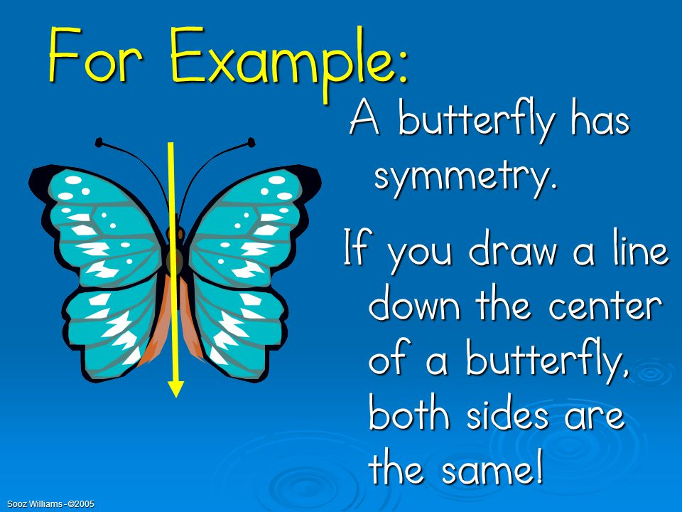 For Example: A butterfly has symmetry.