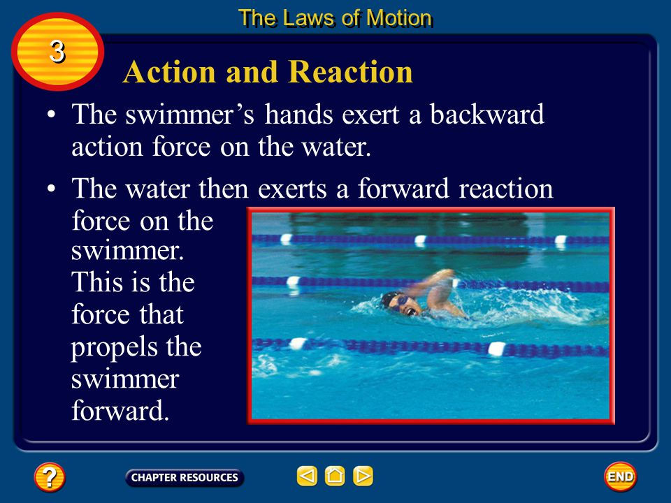 The Laws of Motion 3. Action and Reaction. The swimmer's hands exert a backward action force on the water.