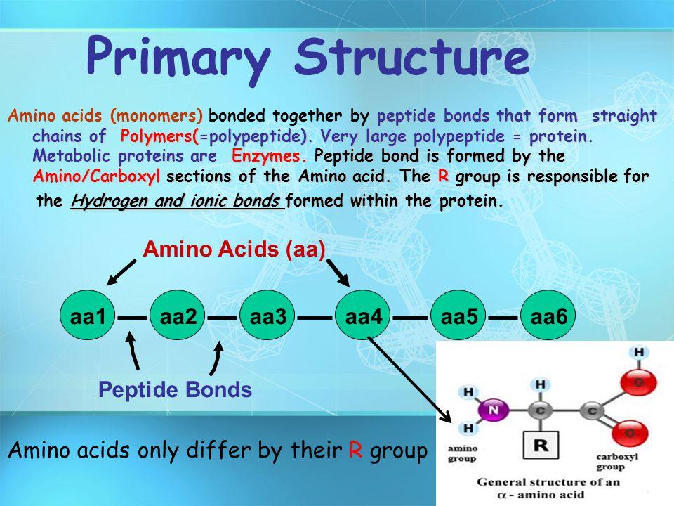 Primary Structure aa1 aa2 aa3 aa4 aa5 aa6 Peptide Bonds