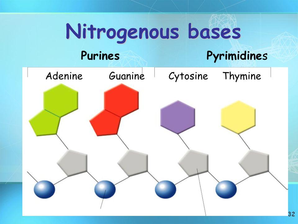 Nitrogenous bases Purines Pyrimidines.