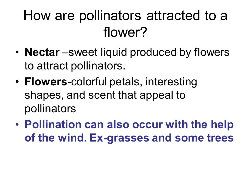 How are pollinators attracted to a flower
