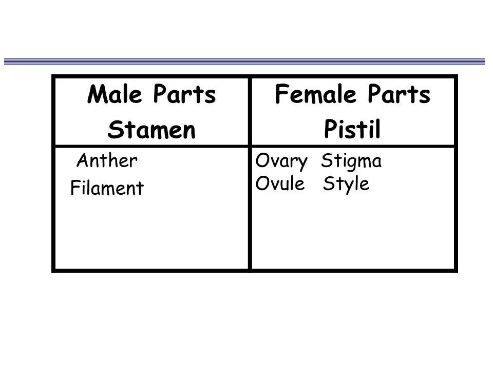 Male Parts Stamen Female Parts Pistil