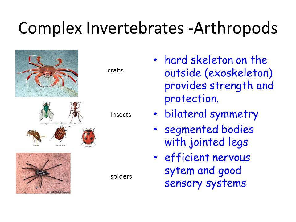 Complex Invertebrates -Arthropods