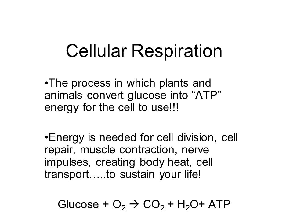 Cellular Respiration The process in which plants and animals convert glucose into ATP energy for the cell to use!!!
