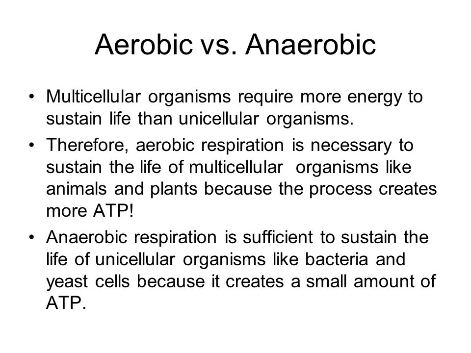 Aerobic vs. Anaerobic Multicellular organisms require more energy to sustain life than unicellular organisms.