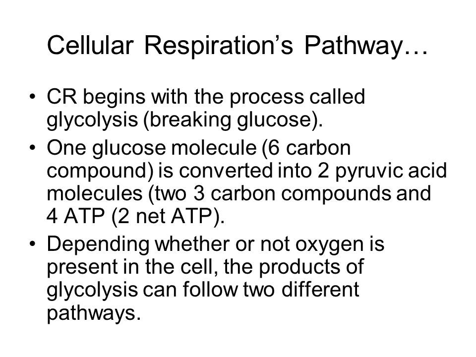 Cellular Respiration's Pathway…