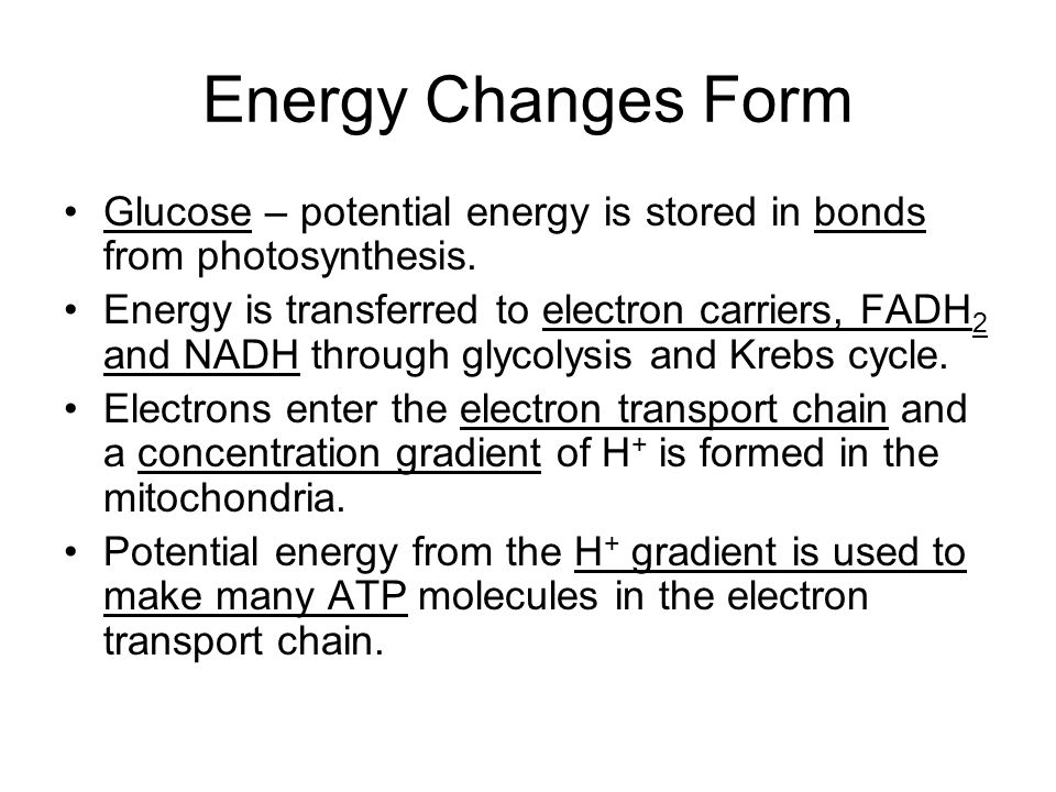 Energy Changes Form Glucose – potential energy is stored in bonds from photosynthesis.