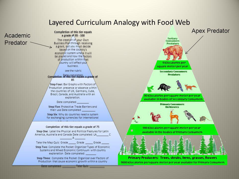 Layered Curriculum Analogy with Food Web