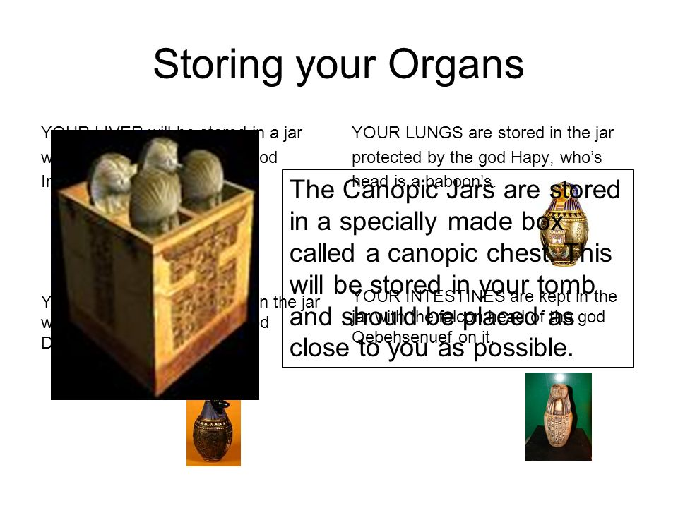 Storing your OrgansYOUR LIVER will be stored in a jar. with the human head of the god. Imsety on it.