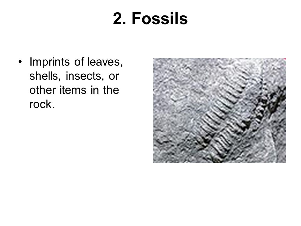 2. Fossils Imprints of leaves, shells, insects, or other items in the rock.