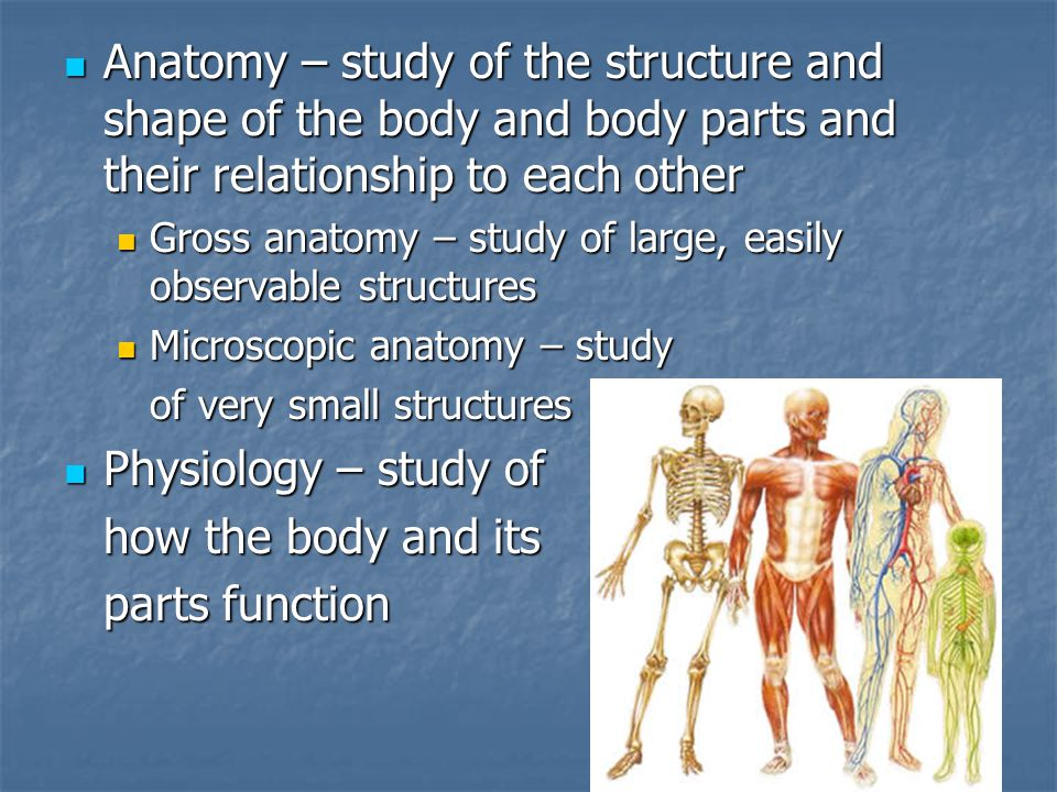 Fantastisch Anatomy And Physiology Chapter 1 The Human Body An ...