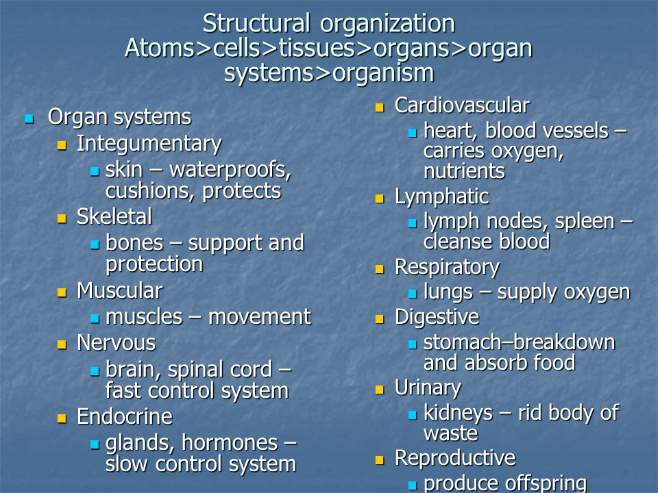 Structural organization Atoms>cells>tissues>organs>organ systems>organism