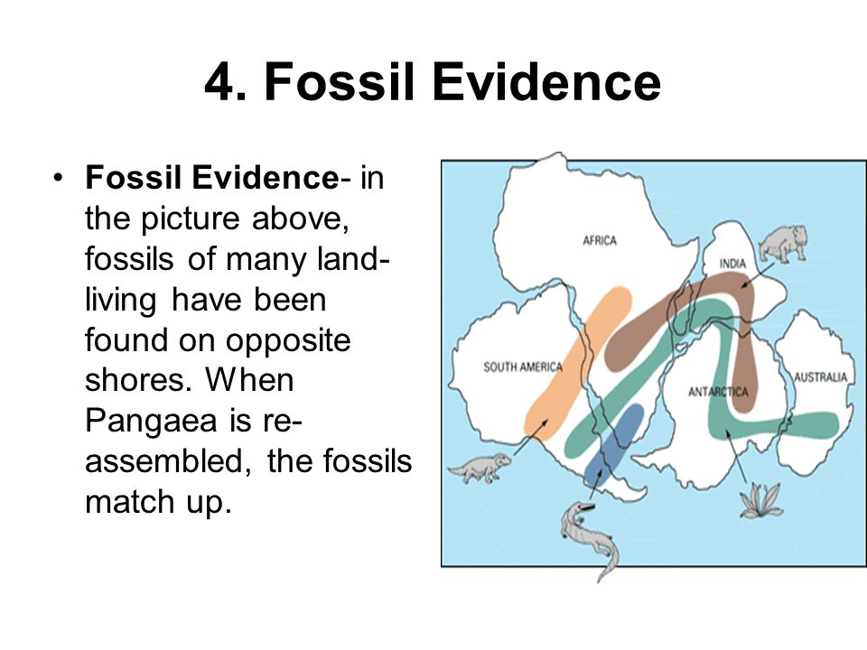4. Fossil Evidence