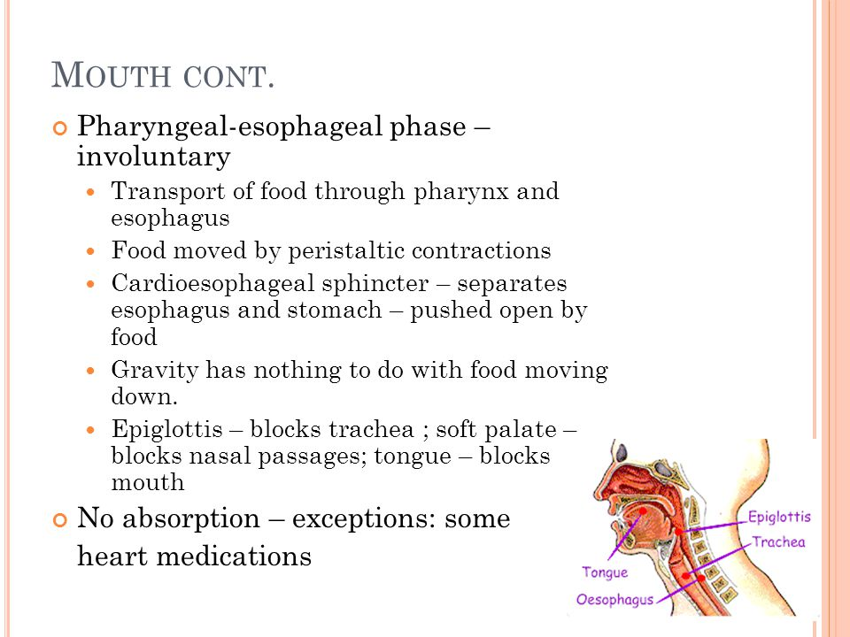 Mouth cont. Pharyngeal-esophageal phase – involuntary