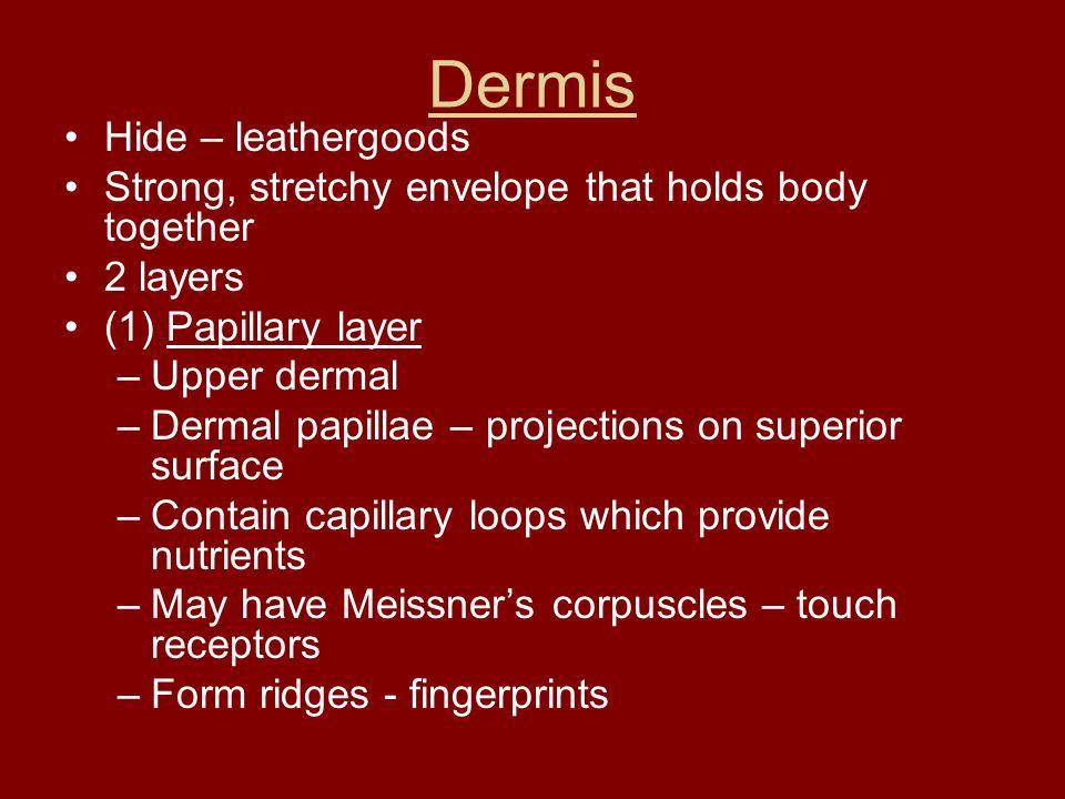 Dermis Hide – leathergoods