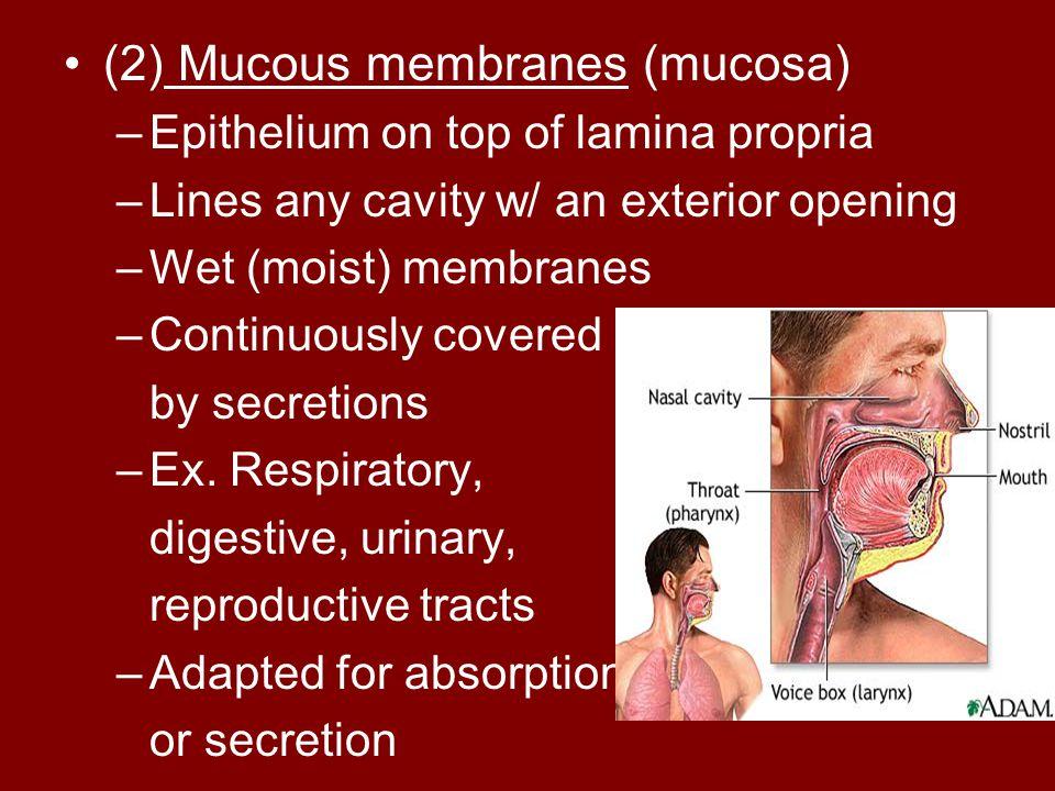 (2) Mucous membranes (mucosa)