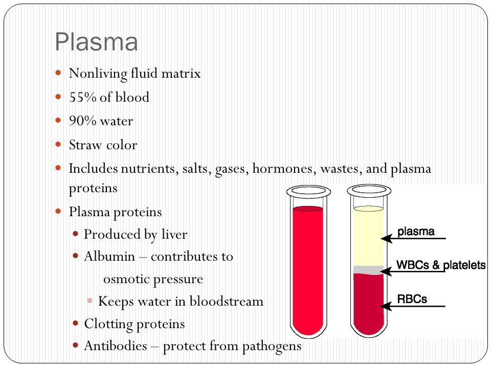Plasma Nonliving fluid matrix 55% of blood 90% water Straw color