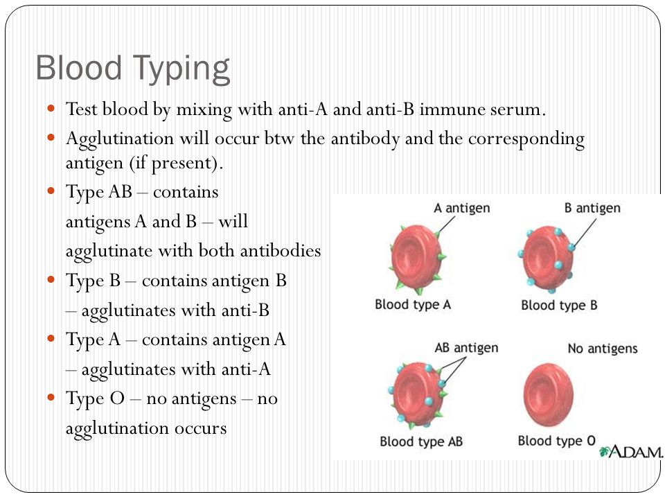 Blood Typing Test blood by mixing with anti-A and anti-B immune serum.