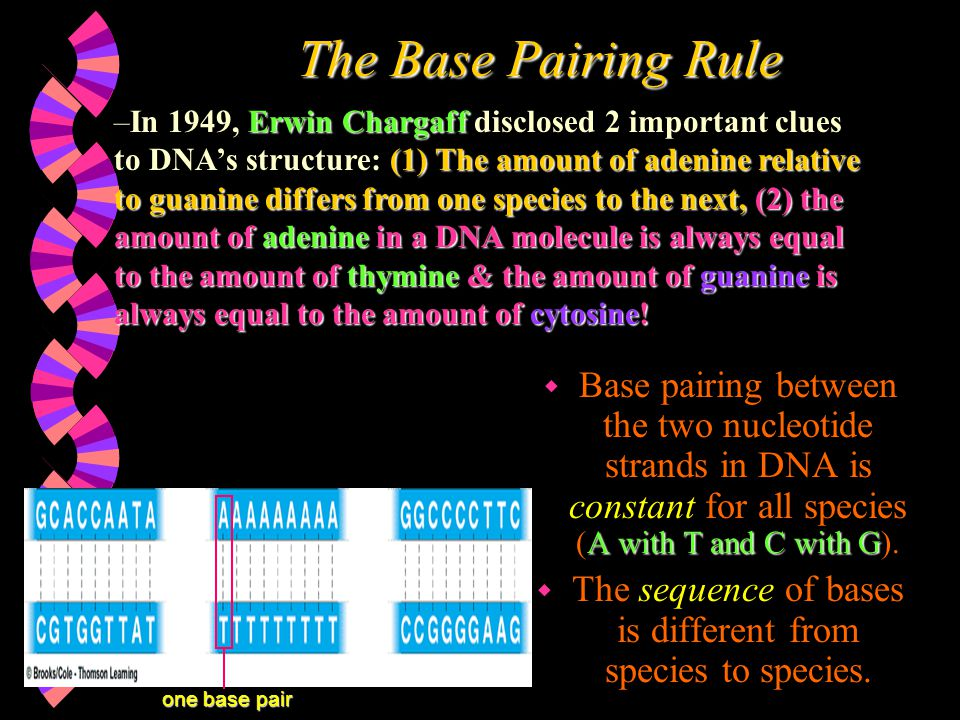 The sequence of bases is different from species to species.