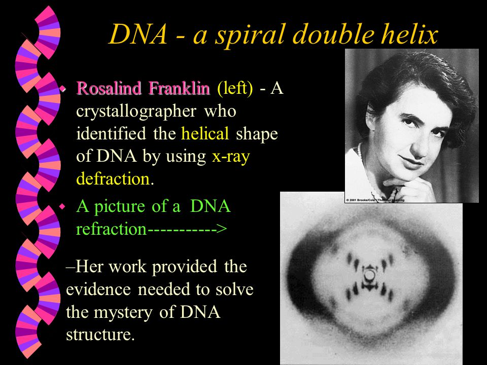 DNA - a spiral double helix