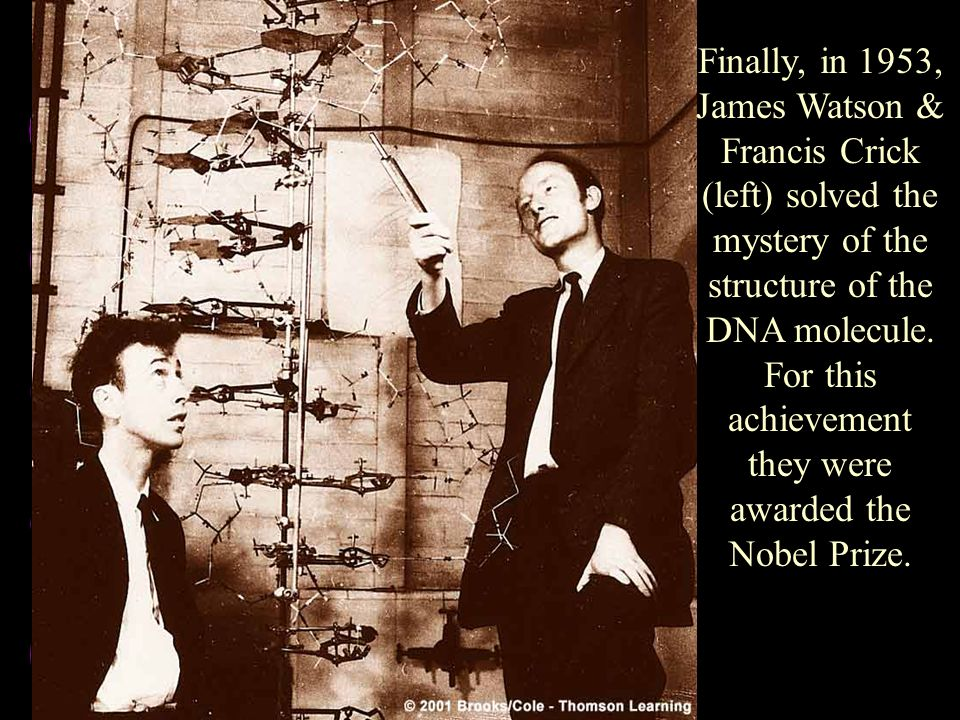 Finally, in 1953, James Watson & Francis Crick (left) solved the mystery of the structure of the DNA molecule. For this achievement they were awarded the Nobel Prize.