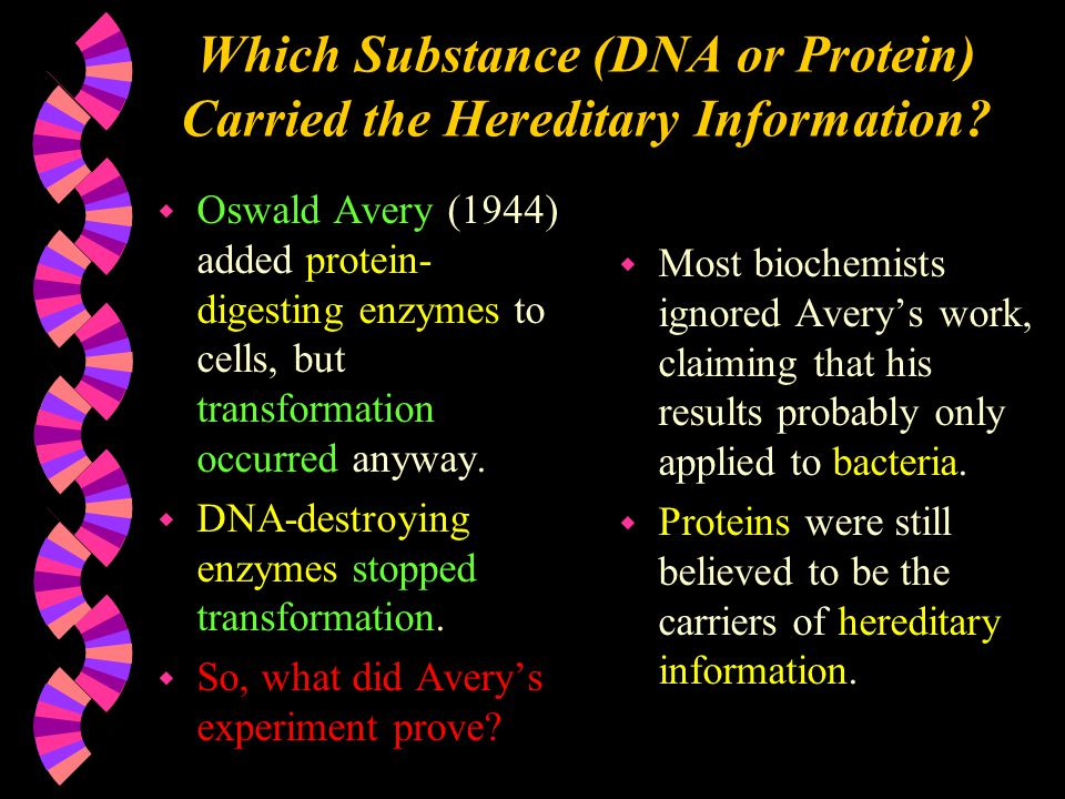 Which Substance (DNA or Protein) Carried the Hereditary Information