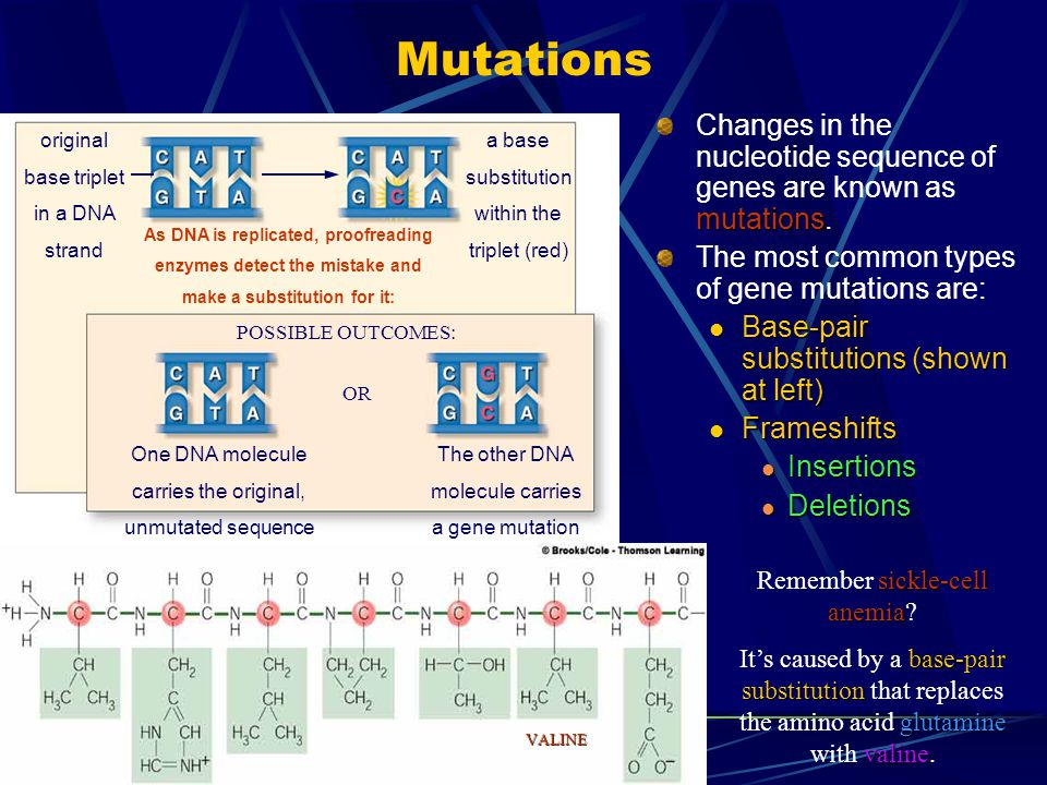 Mutations Changes in the nucleotide sequence of genes are known as mutations. The most common types of gene mutations are: