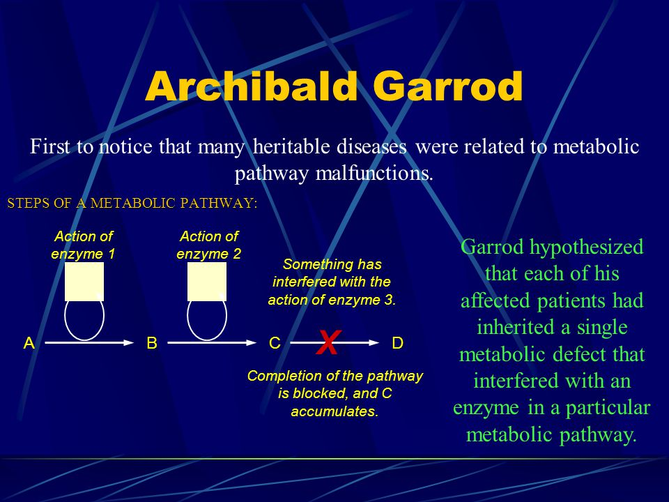 Archibald Garrod First to notice that many heritable diseases were related to metabolic pathway malfunctions.