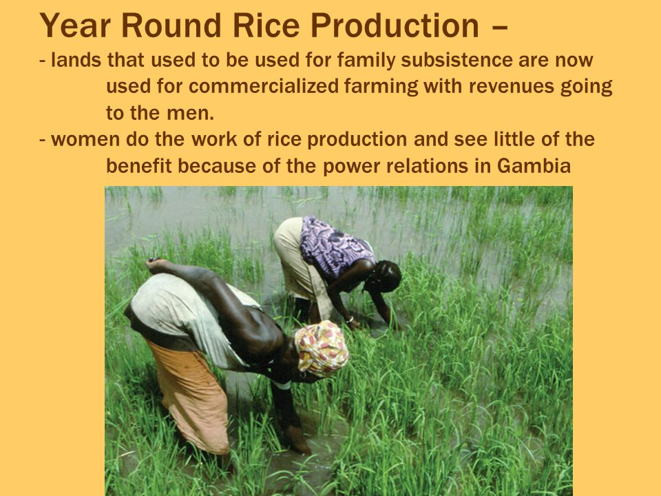 Year Round Rice Production – - lands that used to be used for family subsistence are now used for commercialized farming with revenues going to the men.