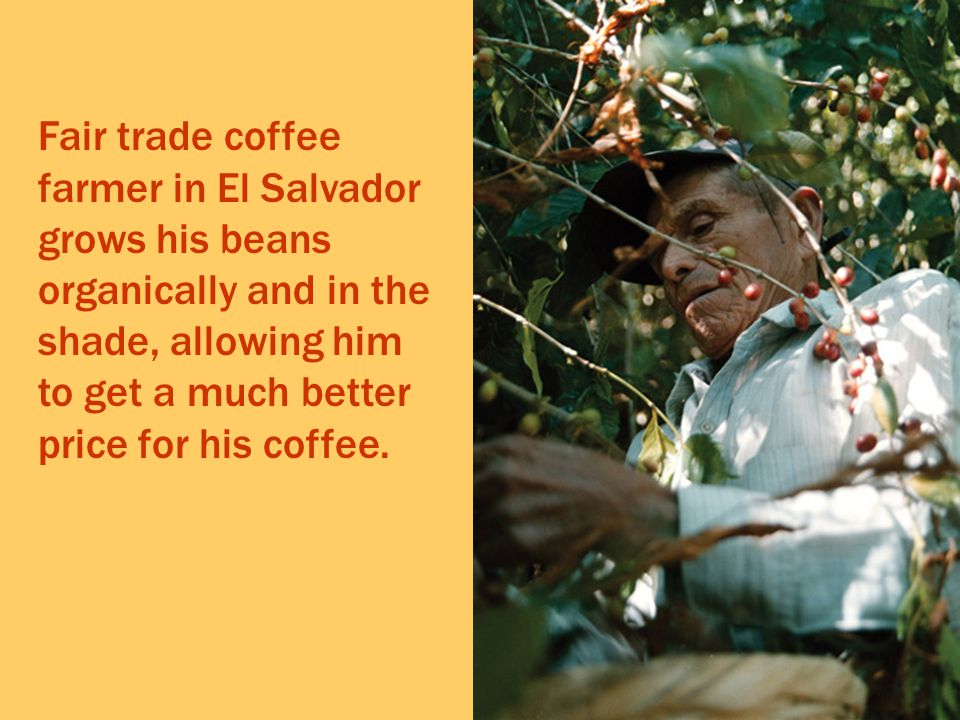 Fair trade coffee farmer in El Salvador grows his beans organically and in the shade, allowing him to get a much better price for his coffee.