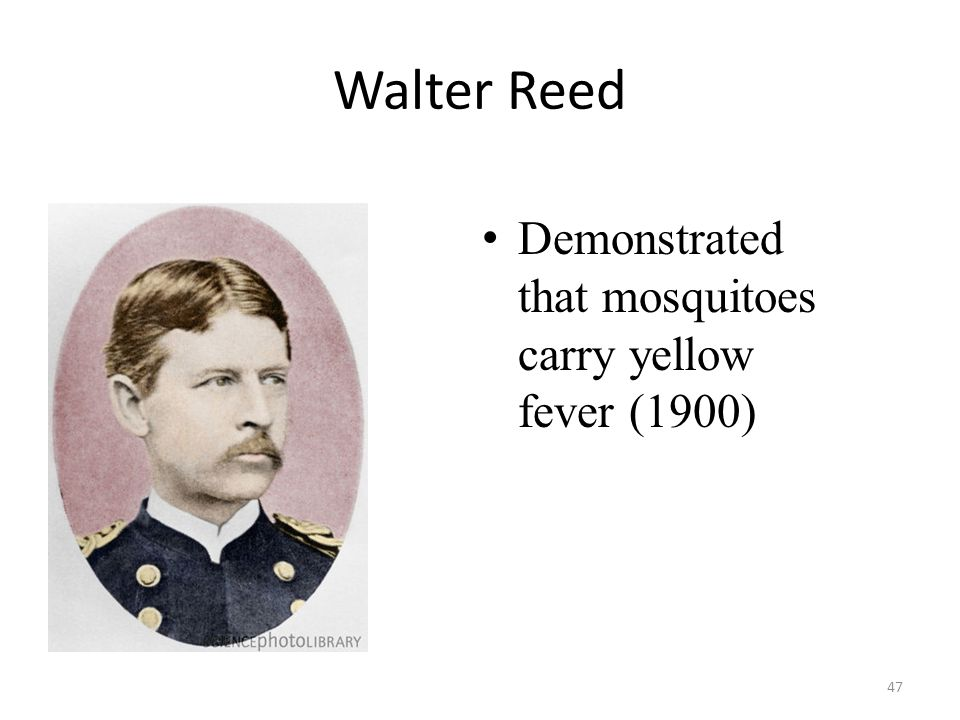 Walter Reed Demonstrated that mosquitoes carry yellow fever (1900)