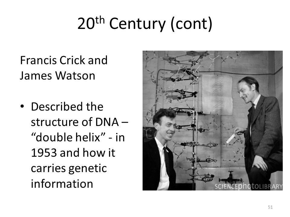 20th Century (cont) Francis Crick and James Watson