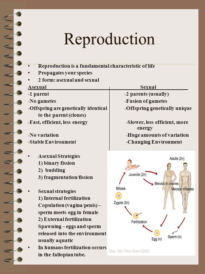 Reproduction Reproduction is a fundamental characteristic of life